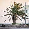 palm tree at entrance to edisto beach coasal area beach