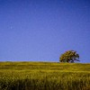 lone tree on the field under open sky and stars at night