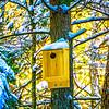 tree birdhouse in winter snow