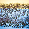 peach tree orchards on snowy winter landscape