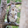 squirrel looking at photographer and waiting to be fed