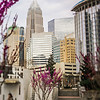 spring time in charlotte north carolina