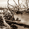 old dead trees on shores of edisto beach coast near botany bay plantation