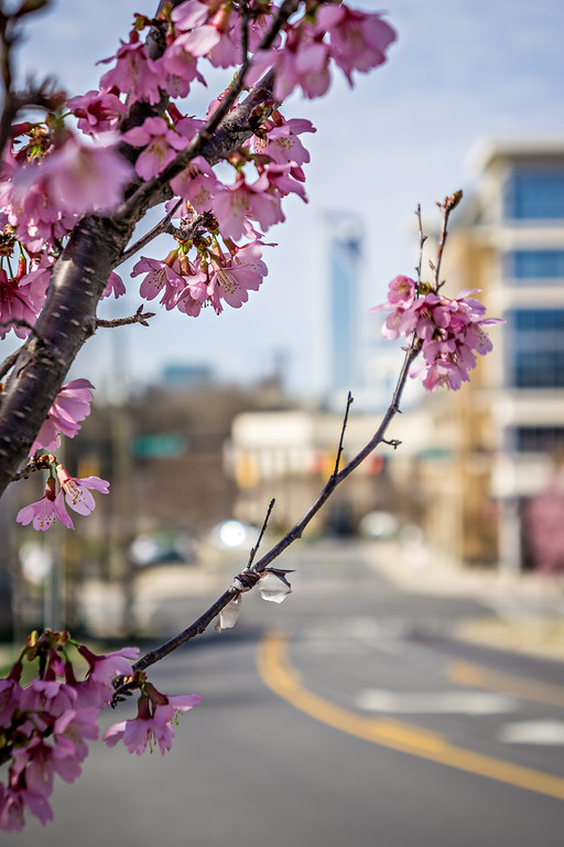 it's spring time in the city