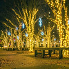 holiday scenes in uptown charlotte north carolina