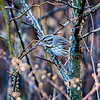 sparrow camoflaged in the thick brush of plants
