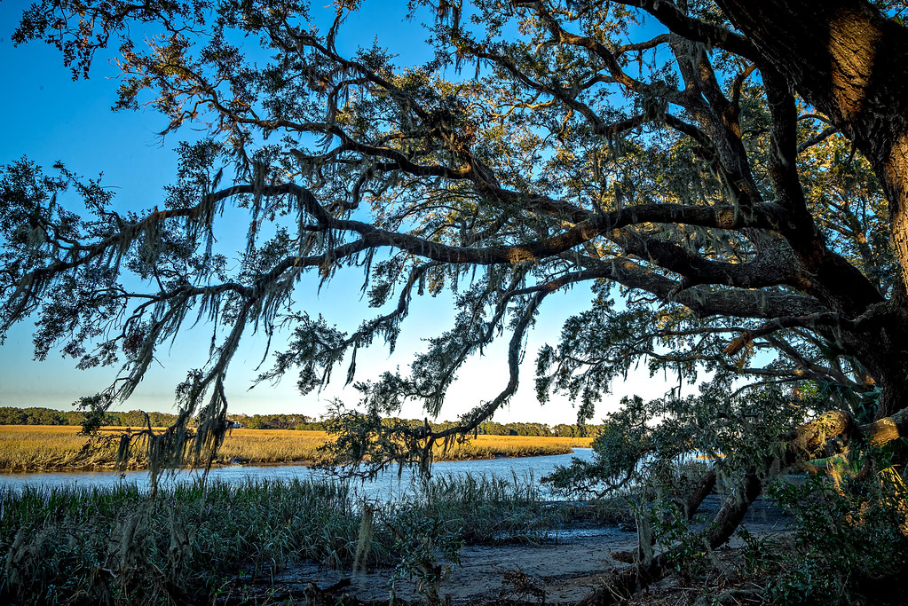 oak trees and beautiful nature at sunset on plantation