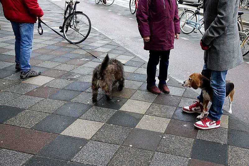 Nederland, Amsterdam, Linnaeusstraat, Amsterdam Oost, Bange hond, 2 januari 2017, foto: Katrien Mulder