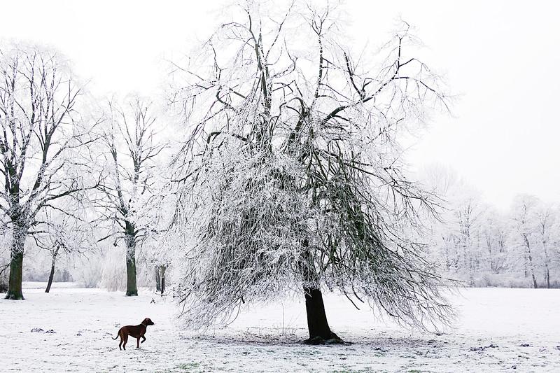 Nederland, Amsterdam, Flevopark, winter, 18 januari 2017, foto: Katrien Mulder