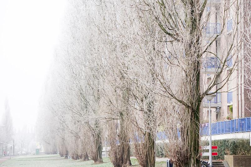 Nederland, Amsterdam, Cruquiusweg,  winter, 18 januari 2017, foto: Katrien Mulder