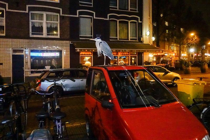 Nederland, Amsterdam, 19 februari 2017, rode Canta met reiger en reigerpoep, foto: Katrien Mulder