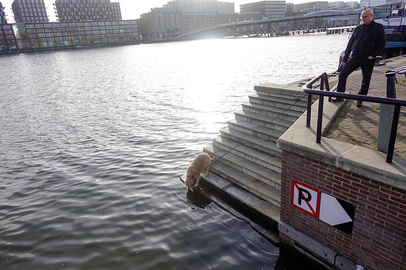 Nederland, Amsterdam, Java eiland, 21 februari 2017, Deze hond drinkt alleen water uit het IJ, foto: Katrien Mulder