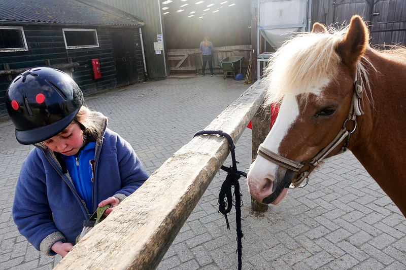 Nederland, Diemen, in de manege, In the riding school,23 april 2017, foto: Katrien Mulder