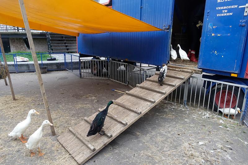 Nederland, Amsterdam, Oosterpark, bedtijd voor de beesten van het Magic Circus, foto: Katrien Mulder