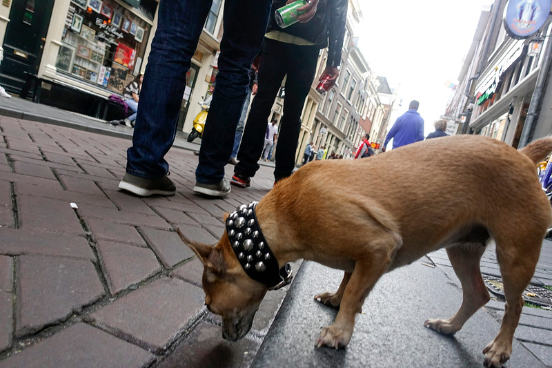 Nederland, Amsterdam, Zeedijk; loslopende hond; Loose dog, 19 augustus 2017, foto: Katrien Mulder