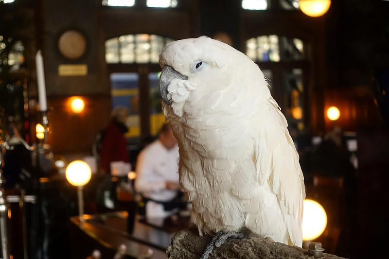 Nederland, Amsterdam, 5 november 2017, Kaketoe Elvis in het eerste klas restaurant op perron 1 van het Centraal Station,: foto Katrien Mulder