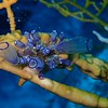 Bluebell tunicate