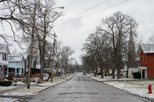 Joed Viera/Staff Photographer-Trees line the sidewalks of Caledonia Street.