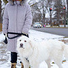 Michele Weir walks her great pyrenees puppy Shelby along East Ave.