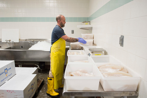 Joed Viera/Staff Photographer- Lockport, NY- Mike Williamson sorts through Monando's wholesale customer's cod shipments behind the fishmonger's offices on East Ave.