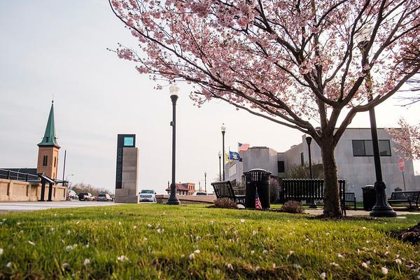 JOED VIERA/STAFF PHOTOGRAPHER-Lockport, NY-A cherry blossom tree blooms by the Locks.