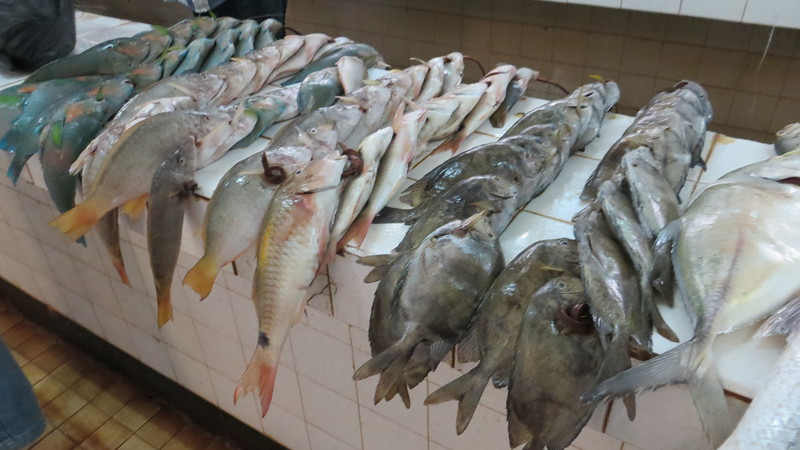 SOME OF THESE ARE REEF FISHES