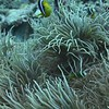 VIDEO: ANEMONES AND NEMO