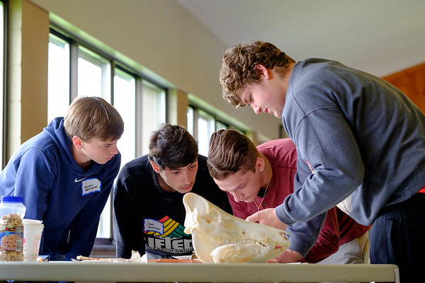 JOED VIERA/STAFF PHOTOGRAPHER-Lewiston, NY-  North Tonawanda High School seniors Joe Roeser, 18, Brian Wudwka, 17, Jake Codelia, 17 and Collin Walker, 18, look over animal remains during the wildlife section of the  28th Regional Envirothon competition at Bond Lake Park Nature Center
