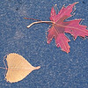JOED VIERA/STAFF PHOTOGRAPHER-Wire art crafted from fallen leaves made by Dawn Estes, one of the vendors for the Optimists' annual Arts and Crafts Festival.