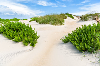 Sand dune at Pea Island National Wildlife Refuge.