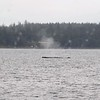 ANOTHER HUMPBACK