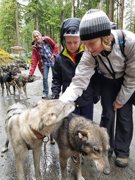 SLED DOGS ARE TAUGHT TO BE GENTLE WITH HUMANS