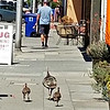 TURKEY & CHICKS ON THE SIDEWALK IN DOWNTOWN BERKELEY
