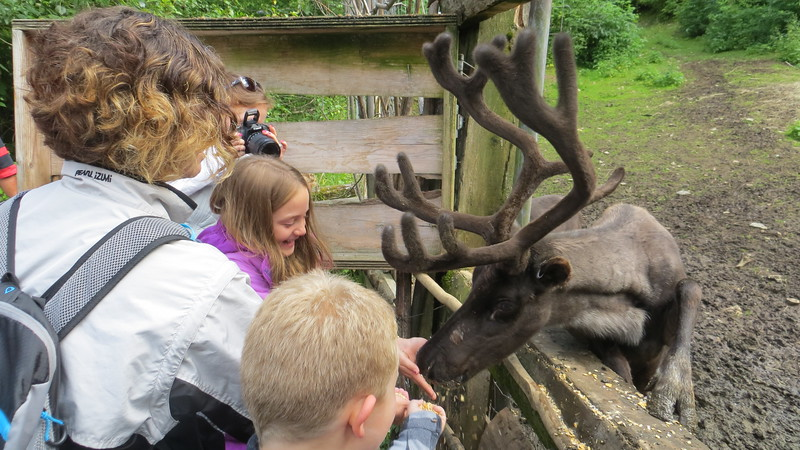 HEATHER FEEDS REINDEER