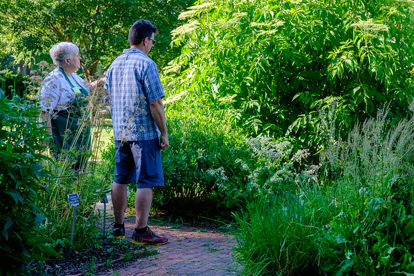 A Kenan Center volunteer gives a tour of their garden during Lockport in Bloom. (Joed Viera/Lockport Union-Sun & Journal)