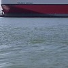 VIDEO: DOLPHINS IN THE GALVESTON SHIP CHANNEL