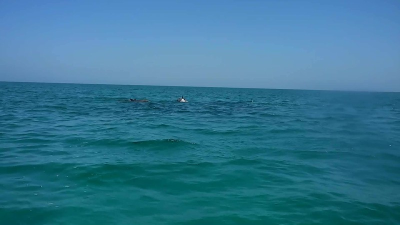 VIDEO:  DOLPHINS ADD JOY TO THE WORLD!