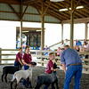 JOED VIERA/STAFF PHOTOGRAPHER-4H kids participate in a contest at the Niagara County Fair.