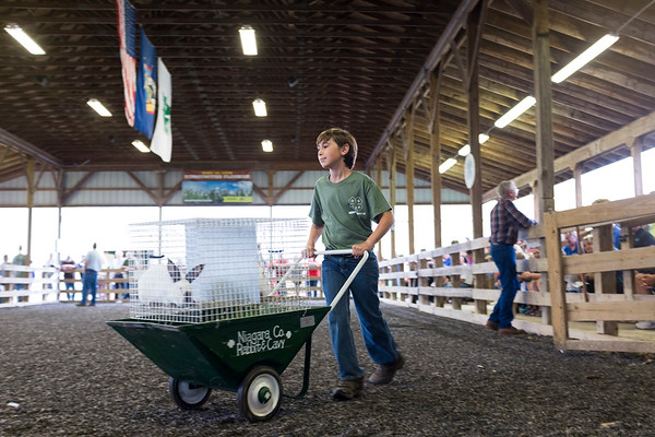JOED VIERA/STAFF PHOTOGRAPHER-4H member Anthony Adams, 11, carts around pair of grand champion rabbits weighing a total of 15lbs  at the 4H Auction during the Niagara County Fair. The rabbits sold for $250 to Erie Niagara Insurance