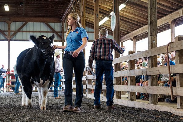 JOED VIERA/STAFF PHOTOGRAPHER-Ella Kroening shows off her champion 1320 pound steer during the Niagara County Fair's Auction. Kroening's steer sold for $7 a pound.