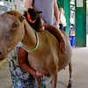 JOED VIERA/STAFF PHOTOGRAPHER-Allannah Webb, 4, hugs Calvin Dent's  goat Serfina at the Niagara County Fair.