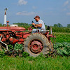 JOED VIERA/STAFF PHOTOGRAPHER-Jeff Hiller tends to his crop on Lockport-Olcott Road.
