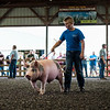 JOED VIERA/STAFF PHOTOGRAPHER-Liam Luke shows off his champion 270 pound Swine during the Niagara County Fair's Auction. Luke's swine sold for $7 a pound.