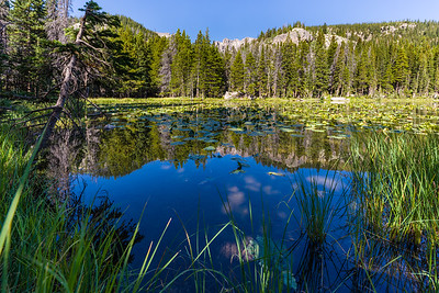 View of Nymph Lake in Rocky Mountain National Park.