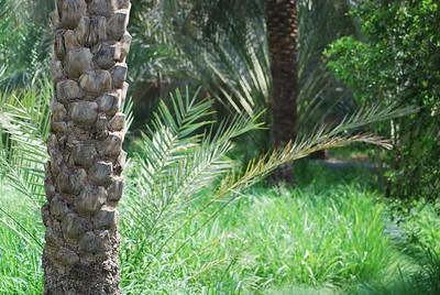 09 Al Ain