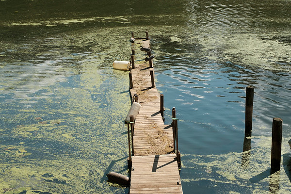 Joed Viera/Staff Photographer-Rich Flay's dock was damaged by the high lake levels. Portions of it are still underwater.