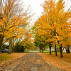 Joed Viera/Staff Photographer-Trees line Hi Point Drive with their golden fallen leaves.
