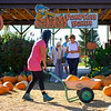 Joed Viera/Staff Photographer-Patrons check out  a pumpkin patch at Becker Farms.