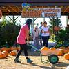 Joed Viera/Staff Photographer-Patrons check out  a pumpkin patch at Becker Farms.