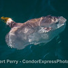 Ocean sunfish with damaged dorsal fin, perhaps caused by a California sea lion.